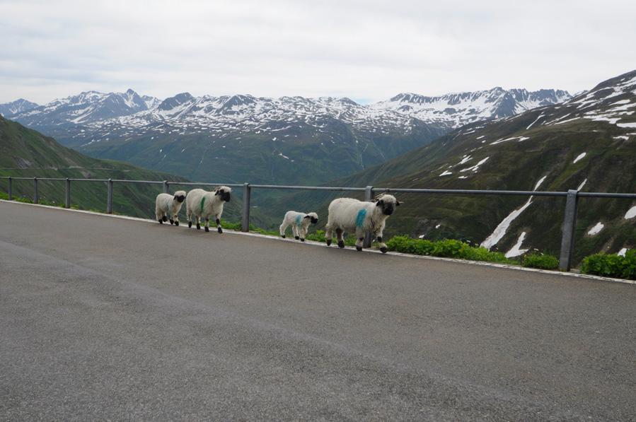 suisse-en-moto_DSC0375